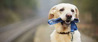 Mi perro tira de la correa. ¿Qué puedo hacer?